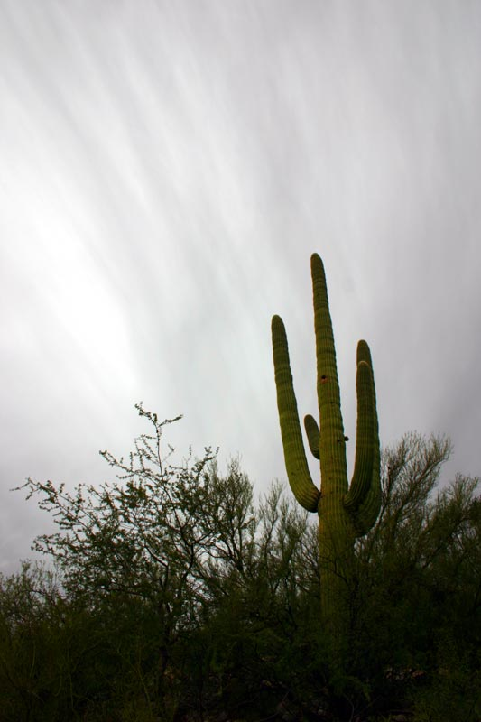 Photo of One of those cactus things
