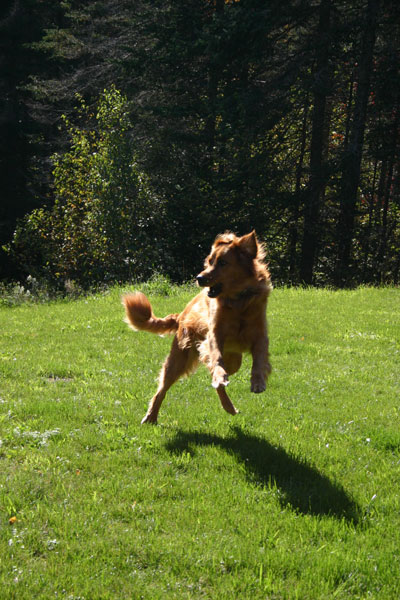 Photo of Levitating Dog