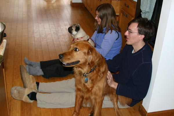 Photo of Dogs On Laps