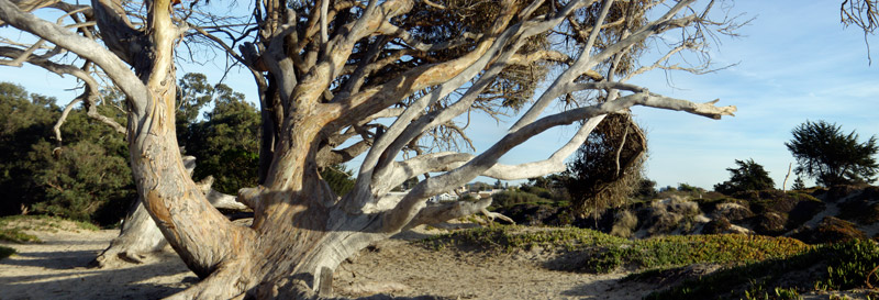 Photo of Beach tree
