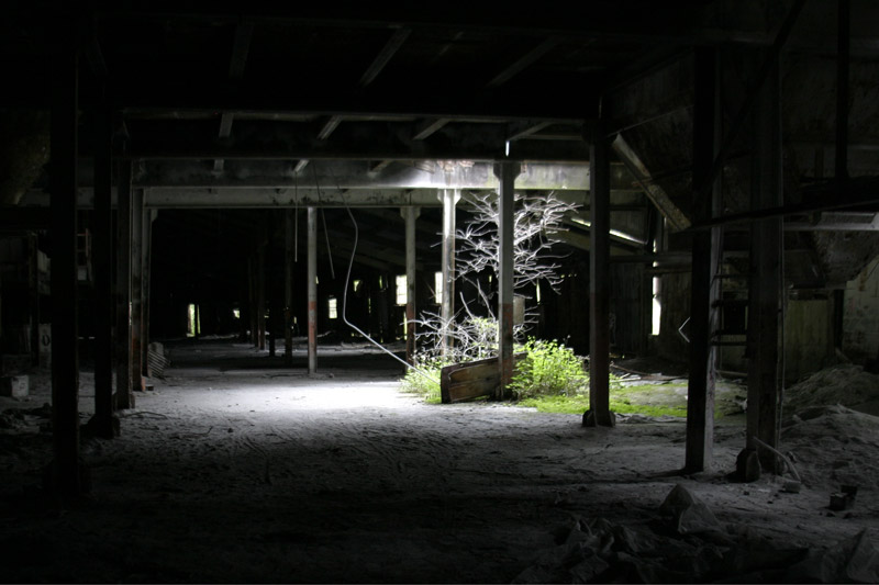 Photo of A tree grows inside the abandoned factory